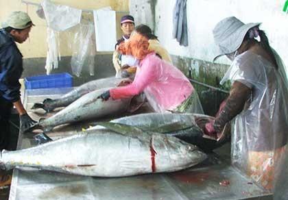 Giá cá ngừ đại dương giảm bất thường - ảnh 1