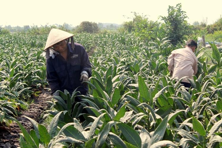Nhộn nhịp xóm thuốc lào Sài Gòn - ảnh 7