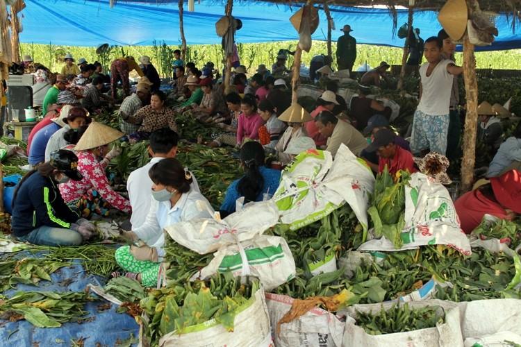 Nhộn nhịp xóm thuốc lào Sài Gòn - ảnh 11