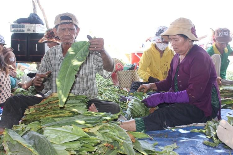 Nhộn nhịp xóm thuốc lào Sài Gòn - ảnh 13