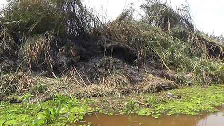 Đám cháy 13,8 ha rừng U Minh Hạ đã được khống chế - ảnh 2