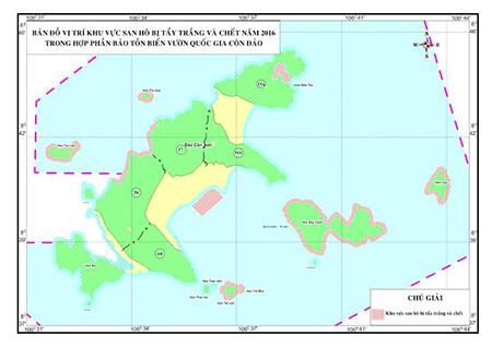 Báo động tình trạng san hô tại Côn Đảo bị tẩy trắng và chết  - ảnh 1