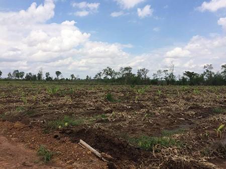 Đào hào ngăn voi rừng, doanh nghiệp bị phạt 50 triệu đồng - ảnh 3