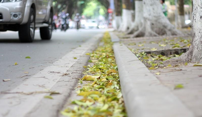 Đẹp mê say những con phố thủ đô ngập lá vàng - ảnh 2