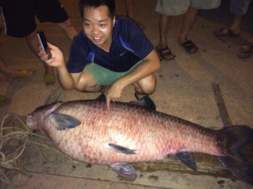 Bắt được cá trắm khủng ở hồ Núi Cốc - ảnh 1