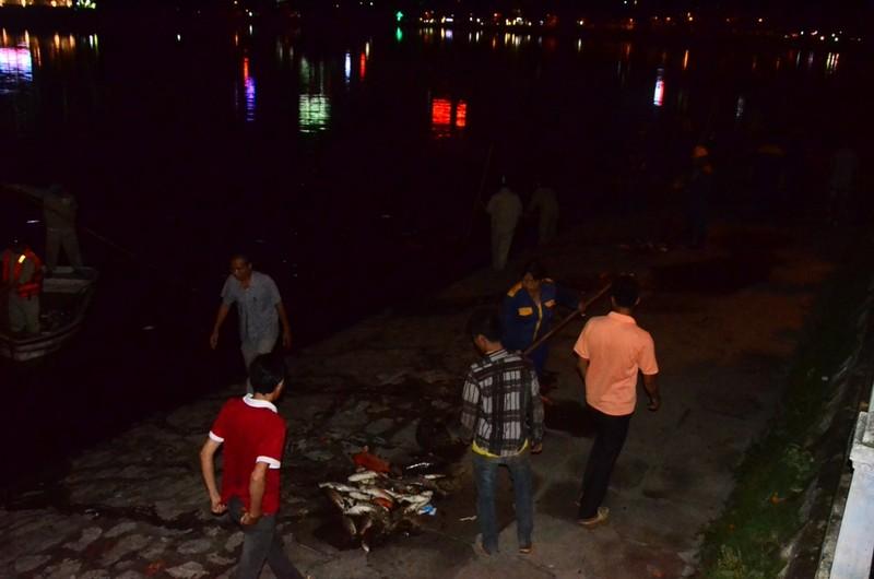 Hà Nội vớt nhiều tấn cá chết trong đêm - ảnh 2