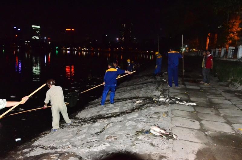 Hà Nội vớt nhiều tấn cá chết trong đêm - ảnh 6