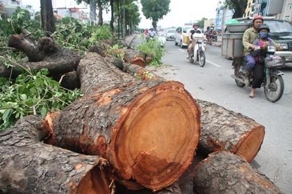 Người Hà Nội vẫn chưa hết bàng hoàng sau cơn bão - ảnh 2