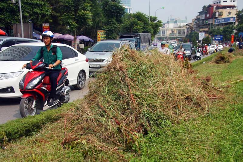 Hà Nội cắt tỉa cỏ trở lại sau 3 tháng 'án binh' - ảnh 11