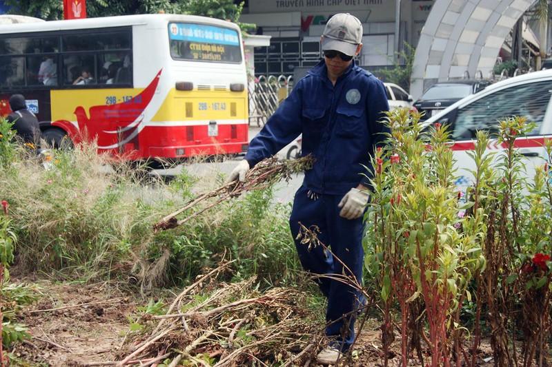 Hà Nội cắt tỉa cỏ trở lại sau 3 tháng 'án binh' - ảnh 2
