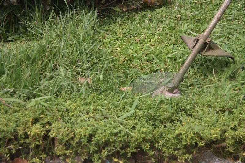 Hà Nội cắt tỉa cỏ trở lại sau 3 tháng 'án binh' - ảnh 5