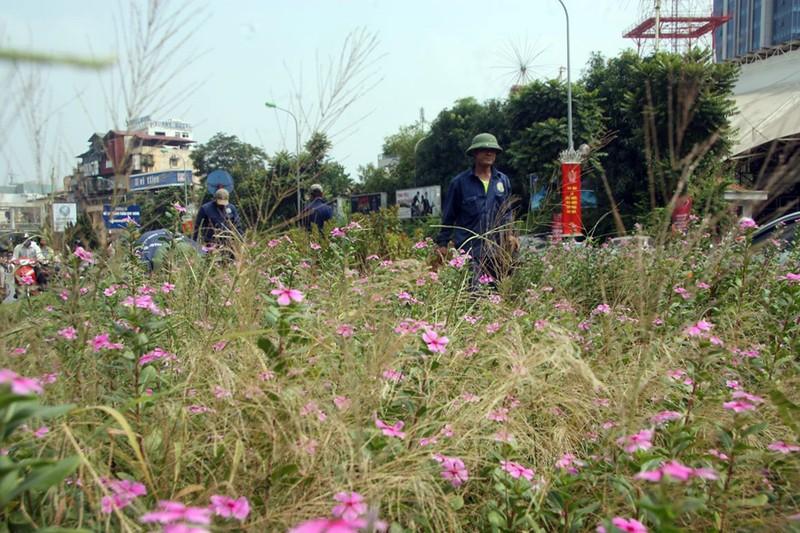 Hà Nội cắt tỉa cỏ trở lại sau 3 tháng 'án binh' - ảnh 7