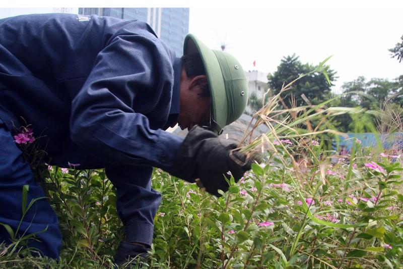 Hà Nội cắt tỉa cỏ trở lại sau 3 tháng 'án binh' - ảnh 8
