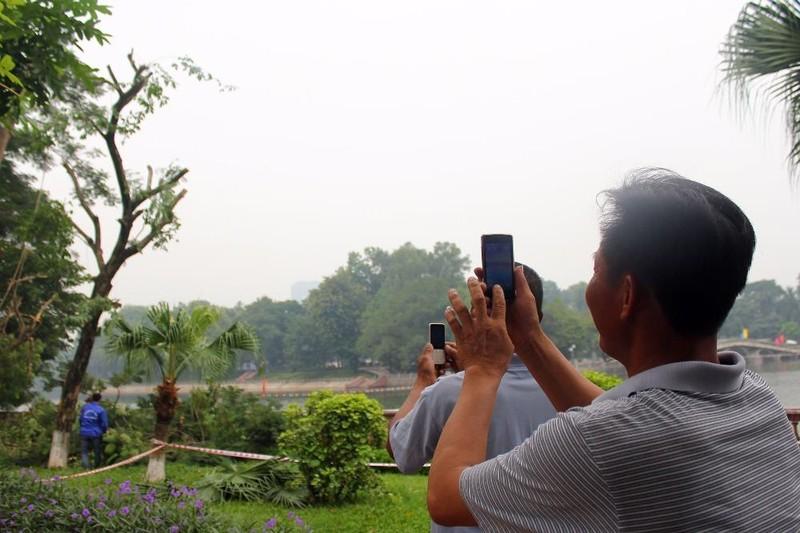 Cắt tỉa hàng cây Kim Mã trước khi di dời - ảnh 10