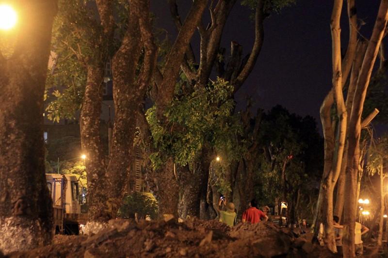 ác cây xanh này sẽ được di chuyển về vườn ươm Văn Giang (Hưng Yên) để tiếp tục duy trì chăm sóc bảo dưỡng