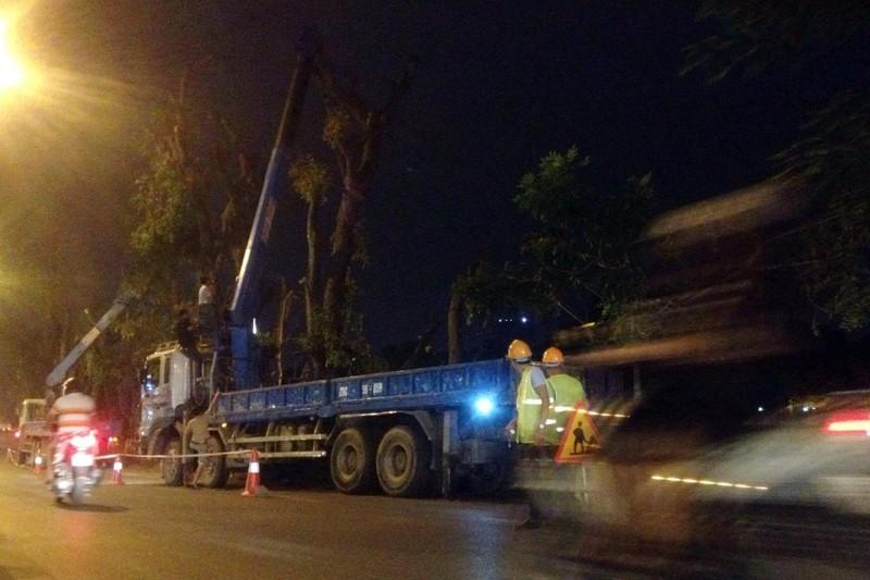 các công nhân bắt đầu tiến hành di chuyển cây trên đường Kim Mã.