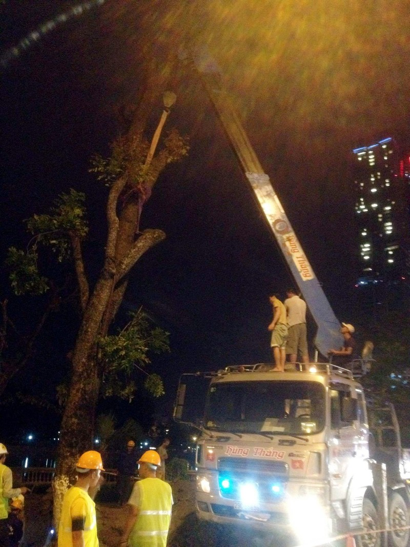 Thâu đêm di chuyển cây trên đường Kim Mã