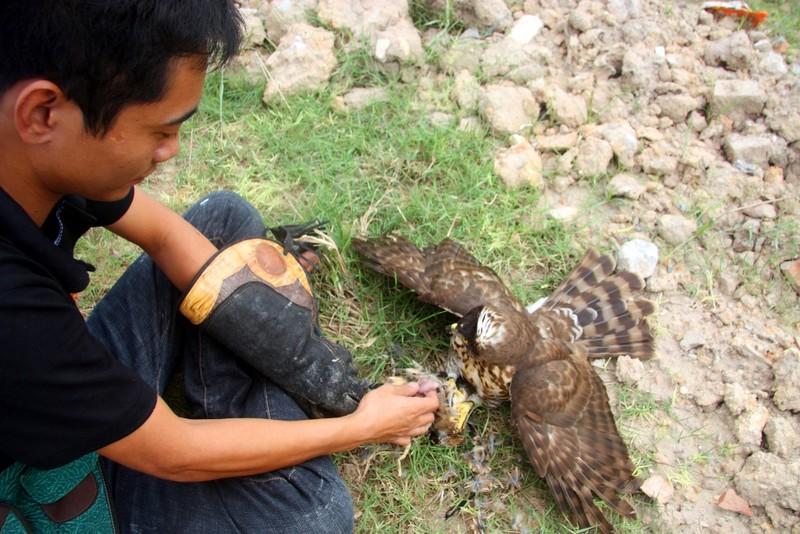 Hào hứng với hội thi chim ở Hà Nội - ảnh 13