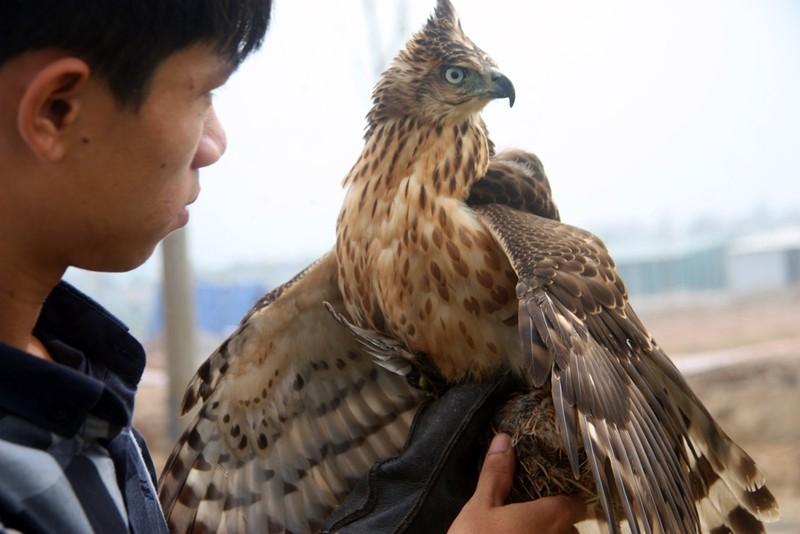 Hào hứng với hội thi chim ở Hà Nội - ảnh 14
