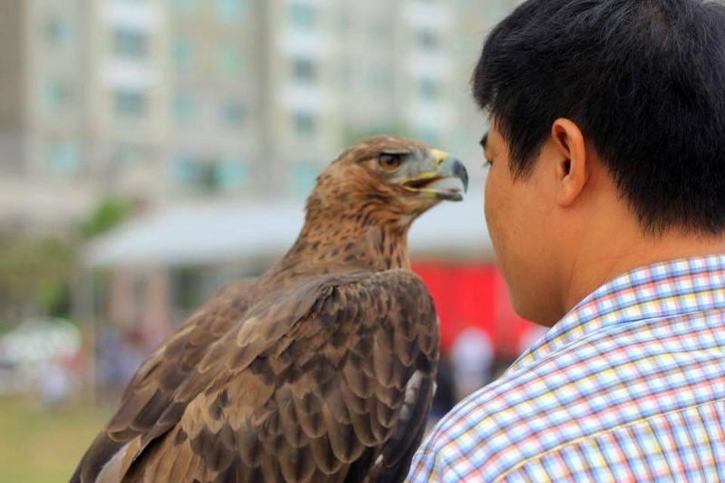 Hào hứng với hội thi chim ở Hà Nội - ảnh 4