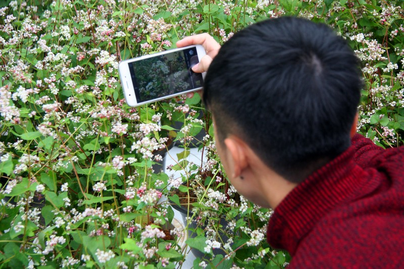 Thiếu nữ Hà thành tạo dáng bên vườn hoa tam giác mạch - ảnh 8