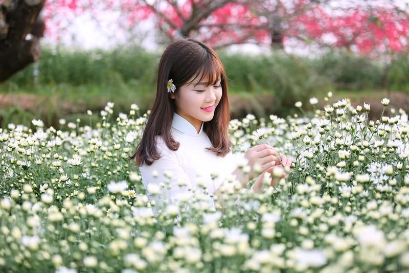 Thiếu nữ Hà thành 'đọ sắc' cùng hoa cúc họa mi - ảnh 11