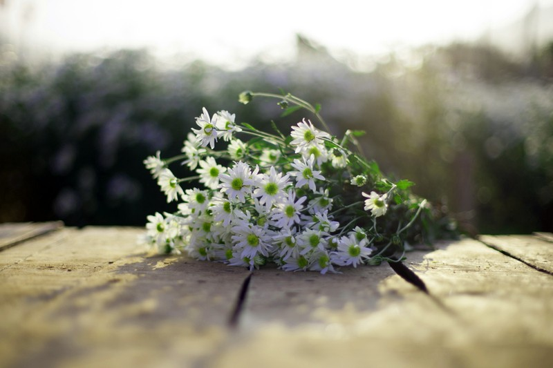 Thiếu nữ Hà thành 'đọ sắc' cùng hoa cúc họa mi - ảnh 5