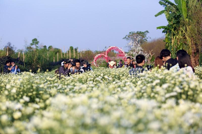 Thiếu nữ Hà thành 'đọ sắc' cùng hoa cúc họa mi - ảnh 1
