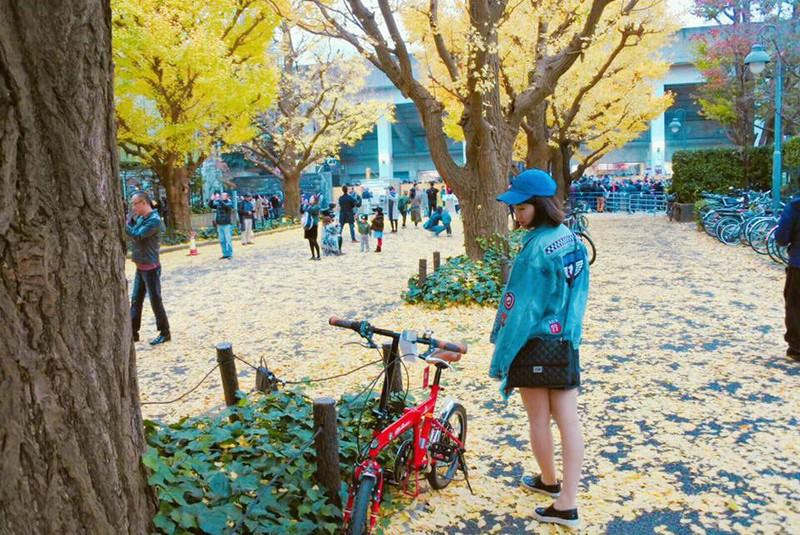 Đẹp mê say với mùa lá vàng ở Nhật Bản - ảnh 12