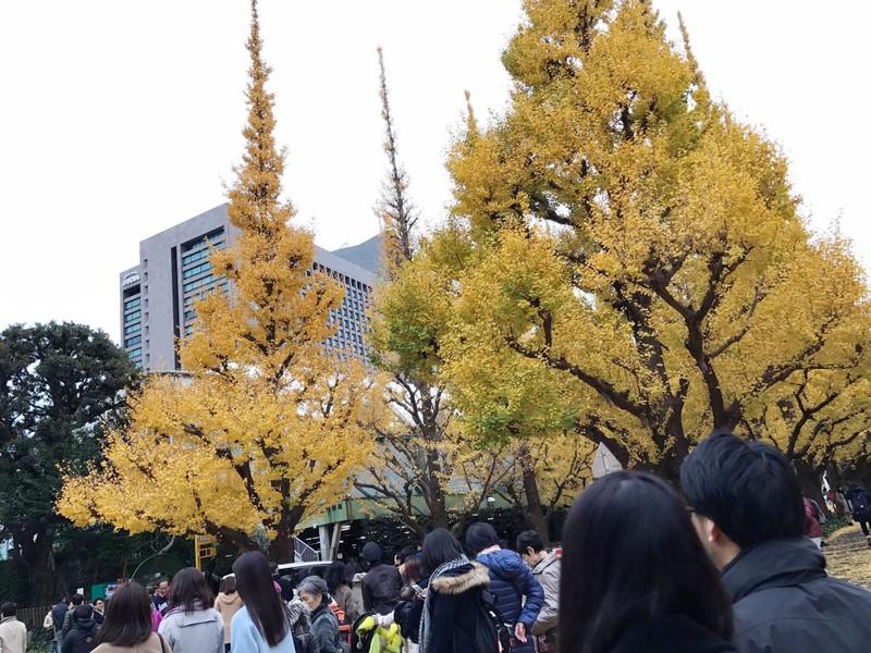 Đẹp mê say với mùa lá vàng ở Nhật Bản - ảnh 5