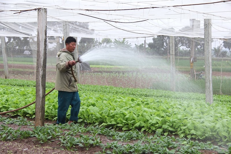 Về vùng đất cung cấp rau sạch lớn nhất Hà Nội - ảnh 1