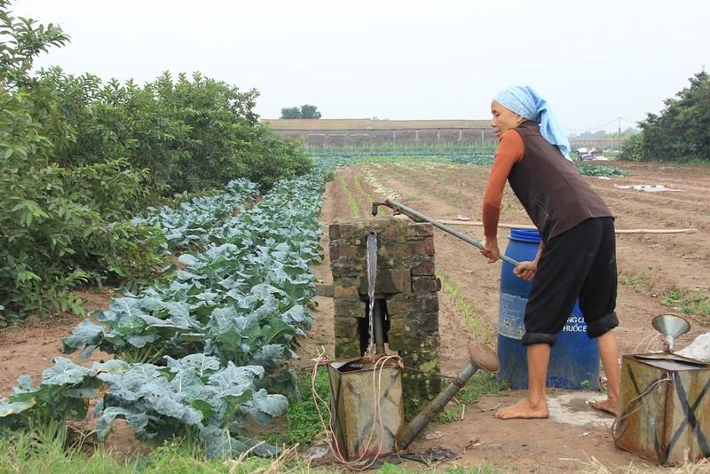 Về vùng đất cung cấp rau sạch lớn nhất Hà Nội - ảnh 7