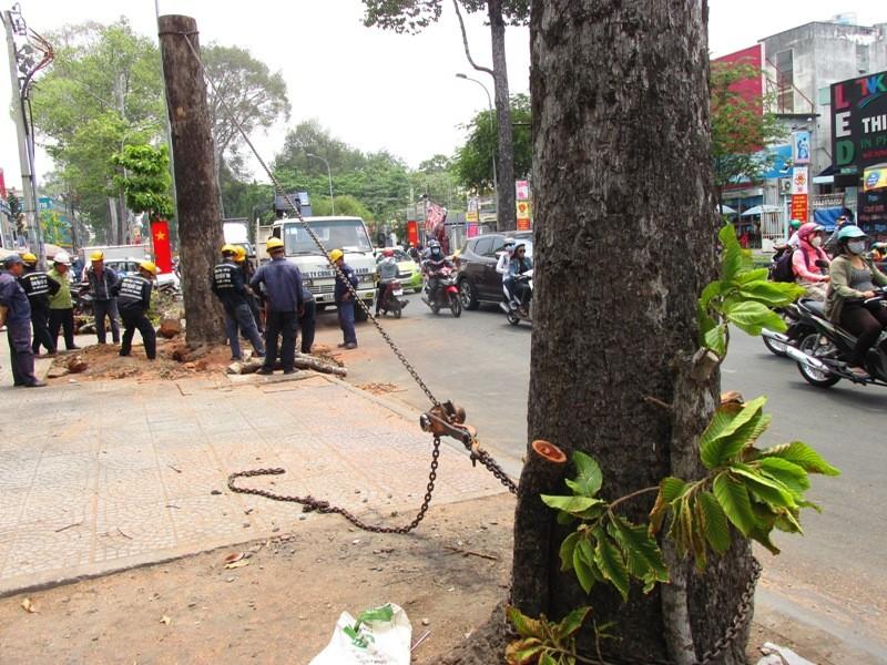 Xử lý một số cây xanh trên đường Đinh Tiên Hoàng - ảnh 1