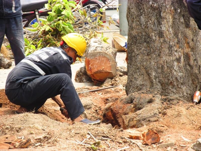 Xử lý một số cây xanh trên đường Đinh Tiên Hoàng - ảnh 2