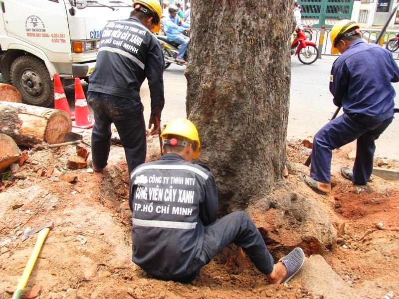 Xử lý một số cây xanh trên đường Đinh Tiên Hoàng - ảnh 3