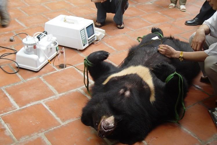 Đại gia nuôi dã thú và mật gấu ở đâu ra? - ảnh 2