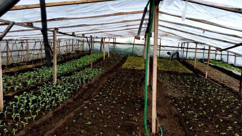 Người phụ nữ Việt sở hữu 2000m vuông rau sạch ở Nga - ảnh 5