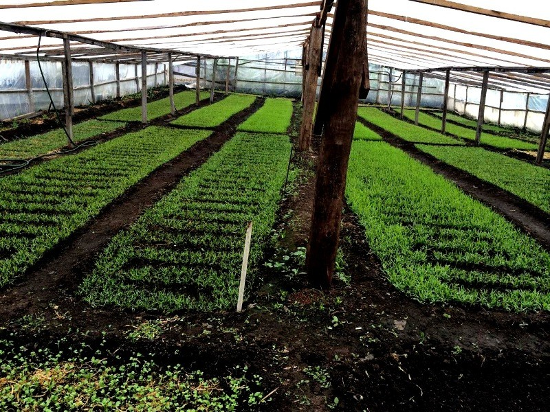 Người phụ nữ Việt sở hữu 2000m vuông rau sạch ở Nga - ảnh 2