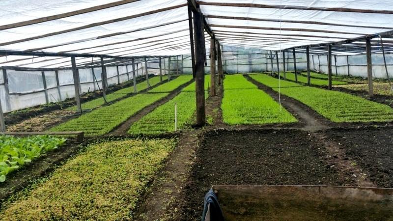 Người phụ nữ Việt sở hữu 2000m vuông rau sạch ở Nga - ảnh 3