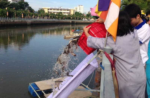 Phóng sanh hàng tấn cá trên kênh Nhiêu Lộc mừng Phật Đản - ảnh 2