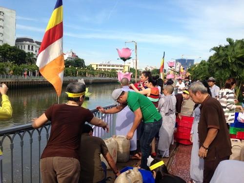 Phóng sanh hàng tấn cá trên kênh Nhiêu Lộc mừng Phật Đản - ảnh 4
