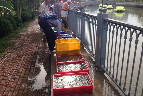 Phóng sanh hàng tấn cá trên kênh Nhiêu Lộc mừng Phật Đản - ảnh 7