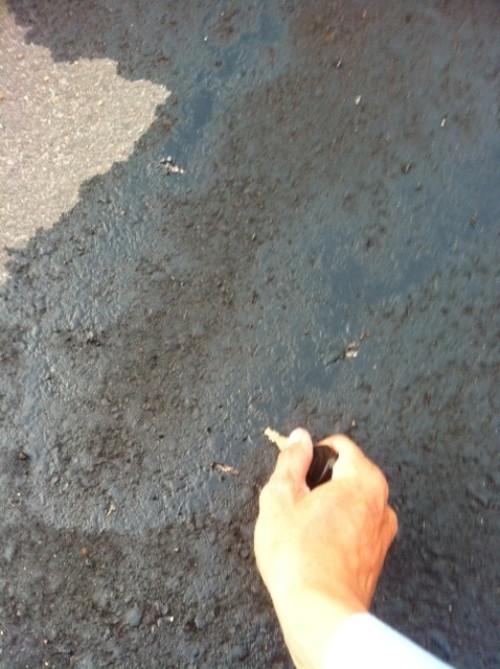 Công bố kết luận về hóa chất phá hoại quốc lộ 1A - ảnh 1