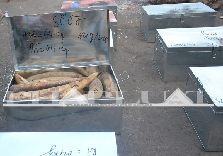 Hơn 735 kg ngà voi và sừng tê giác 'sa lưới' ở cảng miền Trung - ảnh 5