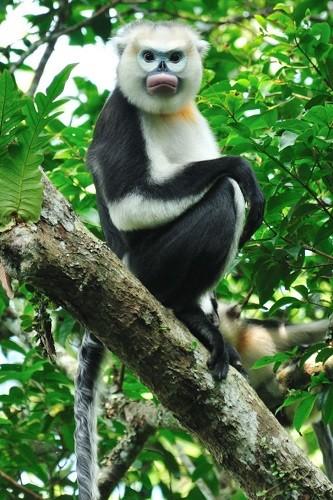 Vingroup công bố Chương trình Bảo tồn Động vật Vinpearl Safari - ảnh 1