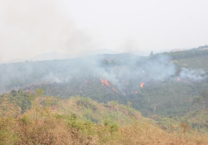 Đắk Nông kỷ luật một loạt cán bộ kiểm lâm để mất rừng - ảnh 1