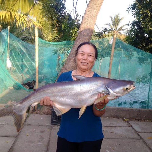 Ngư dân liên tiếp bắt được cá 'khủng' ở sông Đồng Nai - ảnh 1