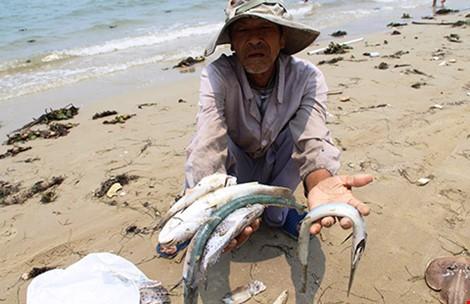 Bất ngờ hủy họp báo về nguyên nhân cá chết ở miền Trung - ảnh 8