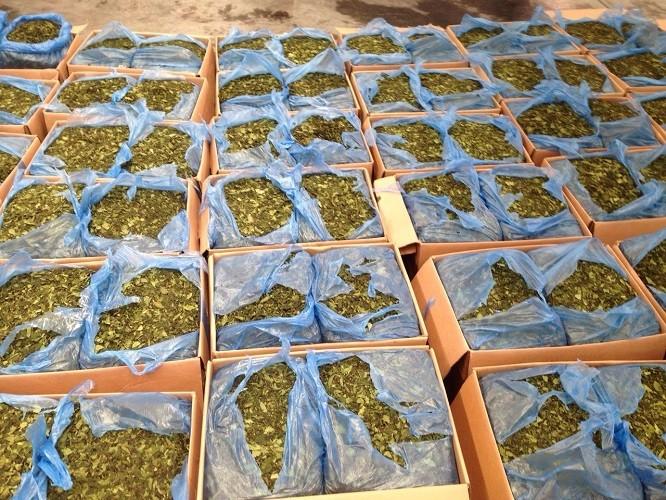 Bắt lô lá cây lạ chứa ma túy cực mạnh tại sân bay Tân Sơn Nhất - ảnh 1