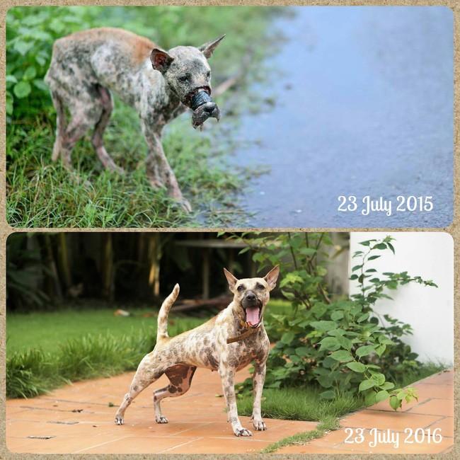 Sau 1 năm, chú chó bị hoại tử mõm tại Bến Tre đã hồi phục thế này đây! - Ảnh 1.